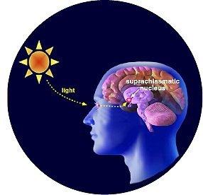 melatonina X luz